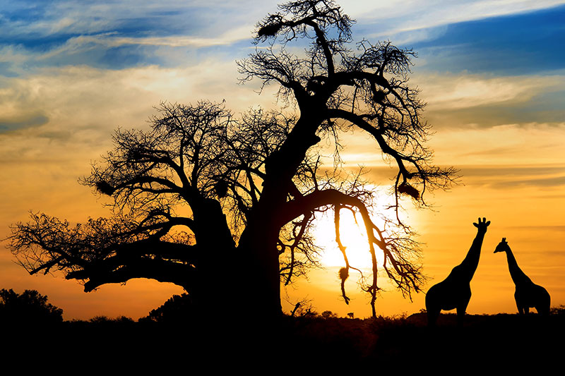 A Private African Wonderland for the Royal Couple